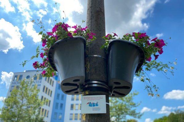 Blumenampel lomonossowallee / WGG Greifswald